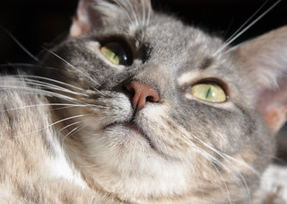 Nimbus and his nose in sun | by cox-on-the-box - art, clay, cats, veg