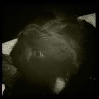 CatLove (Hipstamatic Contest Entry) | by Arc-light
