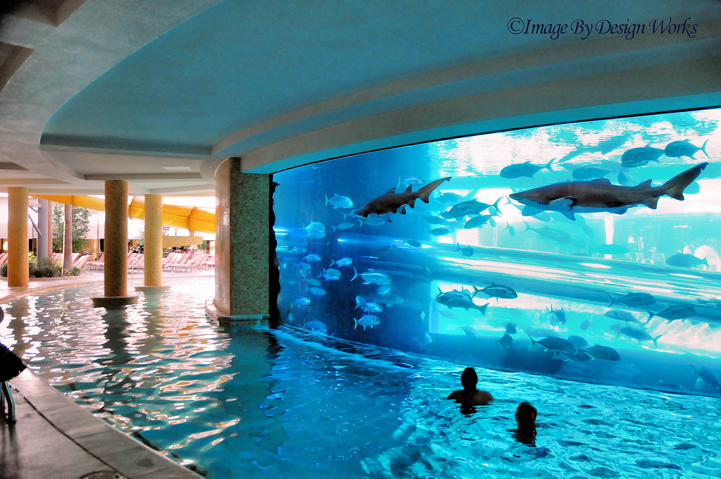 ... Shark Tank ~ Pool | By Image By Design Works ﺕ