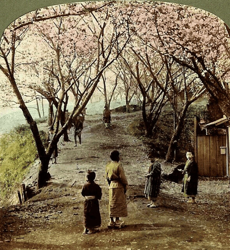 (animated stereo) Sakura in Nogeyama, 1898 | by Thiophene_Guy