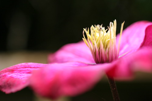 Macro Flower shot | by nessie thompson