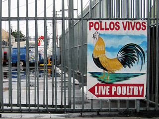 Pollos Vivos | by Ape Flavored
