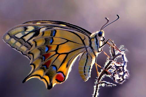 butterfly macaone....!!! | by Ignazio Corda