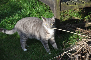 Mmm nice twig! | by cox-on-the-box - art, clay, cats, veg