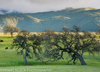 Sunset and storm, Santa Ynez Valley | by Robin Black Photography