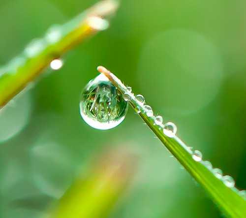 Green drop | by Steve-h