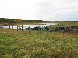 Bison on Syncrude's reclaimed mine site #oilsands #tarsands | by oilgascanada