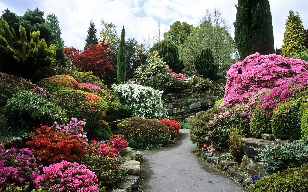 ... Rock Garden At Leonardslee Gardens, West Sussex, UK   Leonardslee Rock  Garden With Flowering