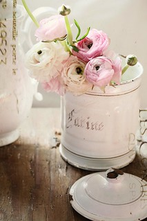 ranunculus in a french enamel canister frl klein flickr. Black Bedroom Furniture Sets. Home Design Ideas