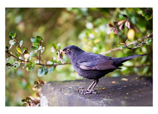 The Early Bird Catches the Worm | by Magdalen Green Photography