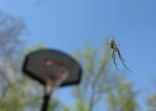 Spider and Basketball Goal | by libberator19000
