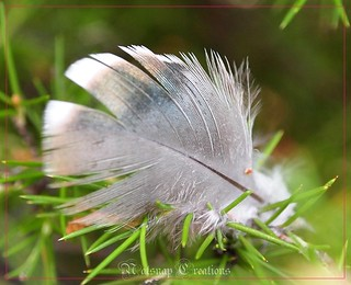 Silver feather~*~Explored | by ~♥~NatSnap~♥~