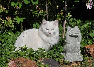 Kater Linus im Garten | by Quasebart ...thank you for 5 Million Views