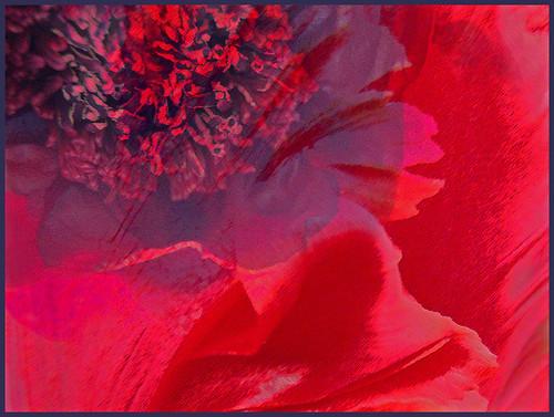 poppy tulip collage