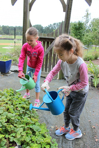 Lower School Garden 2016