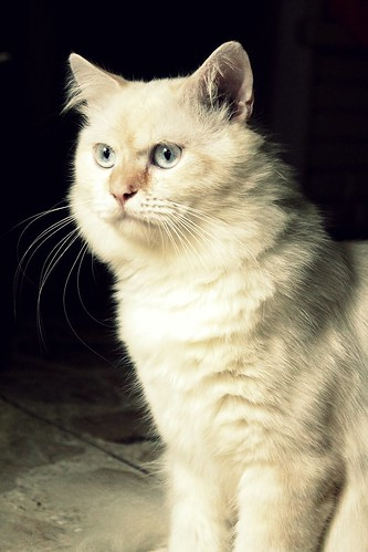Bruno The White Cat | by Agianda