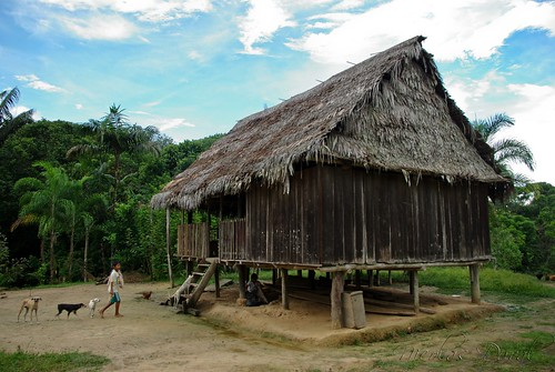 No place like home - Nuevo Tarapaca, Amazon Rainforest, Peru