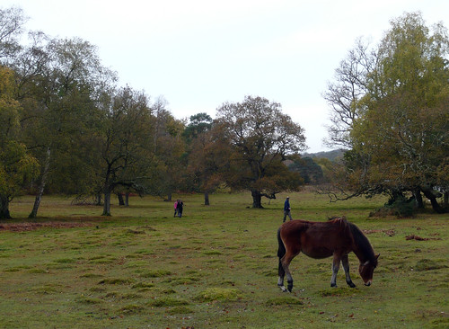 Lucy Hill  The New Forest At Burley