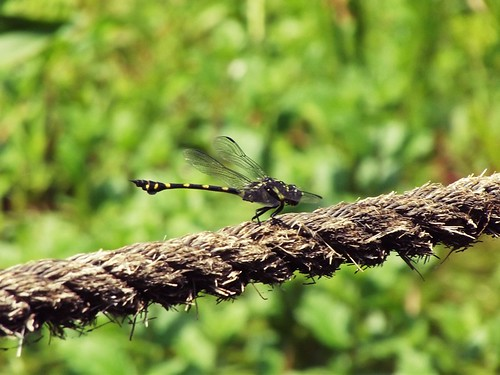 Dragonfly | by faliq@photo