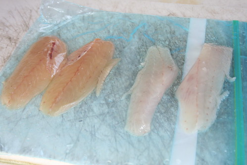 Whiting fillets side by side this is a fillet of freshly for Whiting fish fillet