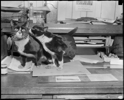 Cats making love, Boston waterfront | by Boston Public Library