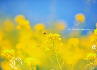 Yellow Glow.. © Glenn E Waters. Hit Explore.  Over 7,000 visits to this image.   Thank you. | by Glenn Waters ぐれんin Japan.