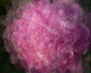Multi-layered Peonies | by BethsTakeOnLife.blogspot.com