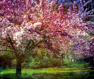 ❀ Printemps ❀ Spring ❀ | by ✿ nicolas_gent ✿