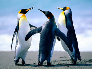 Penguins | by j8lord