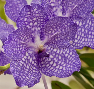 Orchid-Show41-NYBG | by Lydia2222