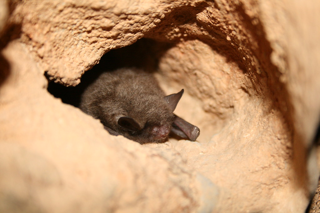 Image result for hibernating bats
