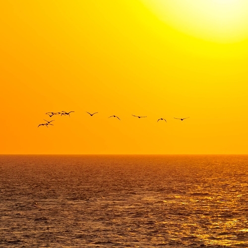 Pelicans going home | by hosieo