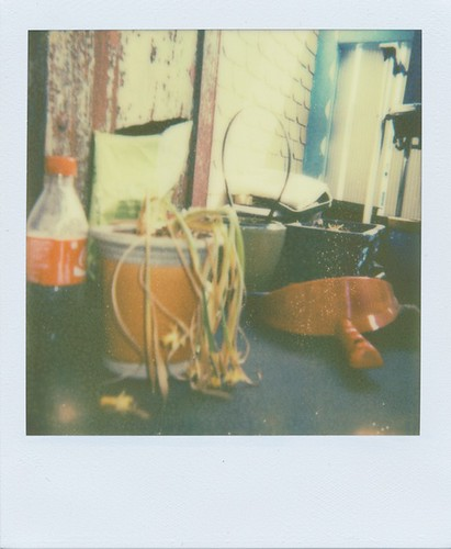 PX 680 COLOR SHADE Beta-Testfilm No. 1 | by Rogers Fotos