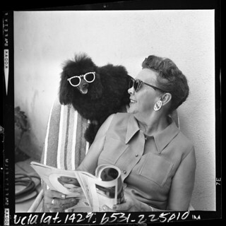 Poodle in Sunglasses | by The Cardboard America Archives