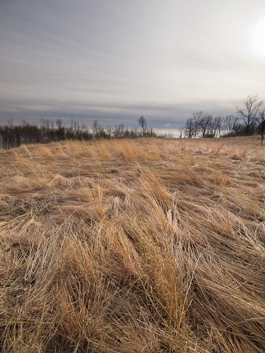 Prairie grass at Richardson Nature Center | by SMR Labs