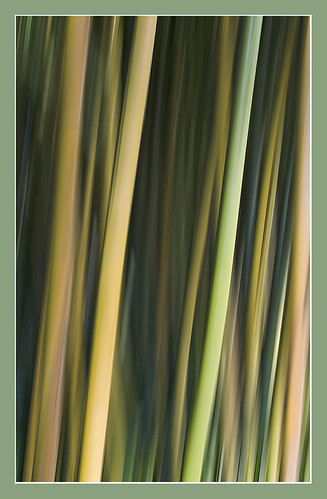 Bamboo | by Les Cornwell Photos