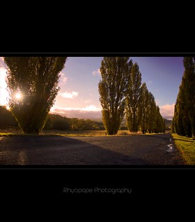 Streets Lined With Poplars | by rhyspope