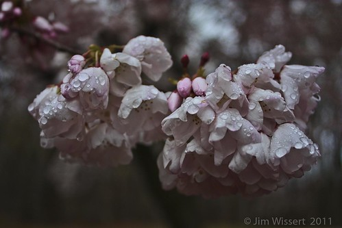 Wet Flowers | by JWWizzard