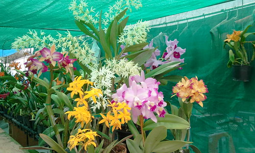 Tuyet's Orchids GWCC | by Tuyetsorchids