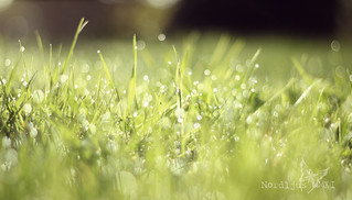 ~ morning dew ~ | by Nordljus*