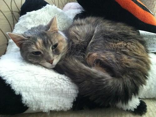 Cat Pillow Pet Amazon