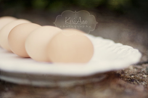 eggs KeriAnn Photography | by ~ Keri