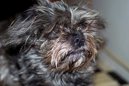 Mixed Dog Breeder