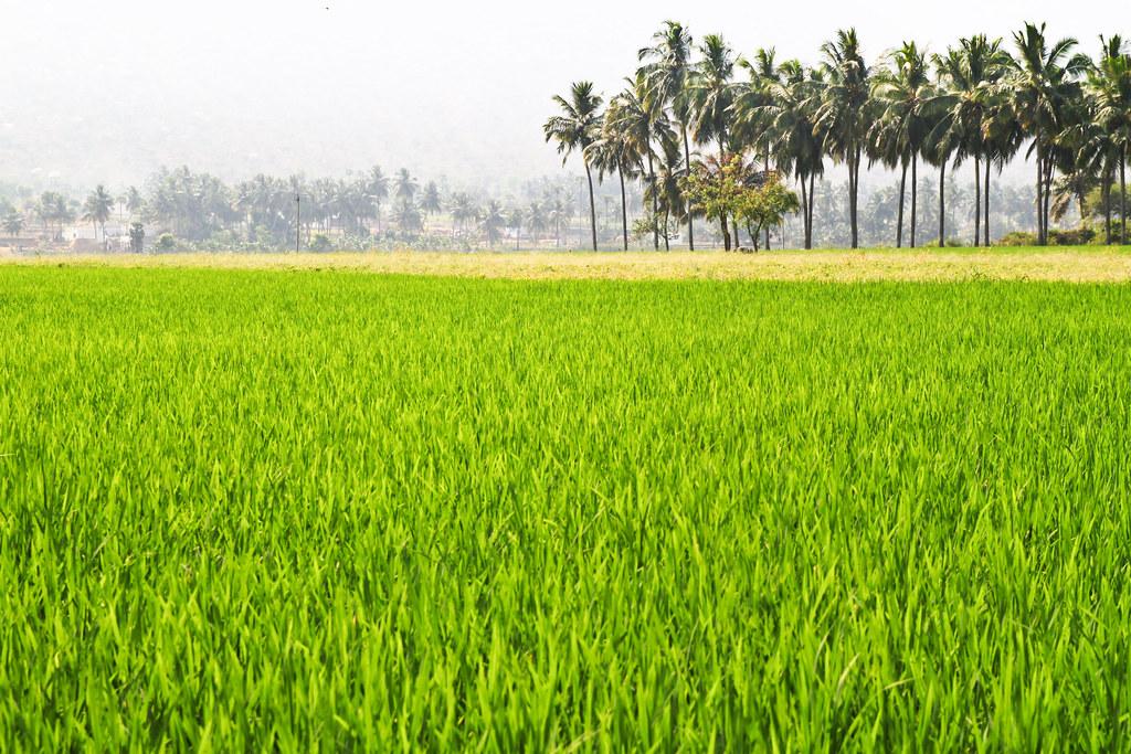 west-godavari-dt-prajasankalpa-yatra-padayatra-ys-