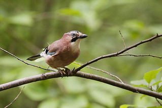 Jay 03 | by Mike G Photos