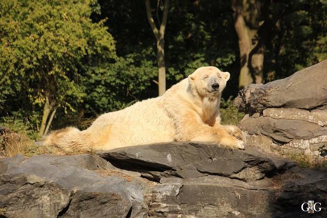 Tierpark Friedrichsfelde 25.09.16117