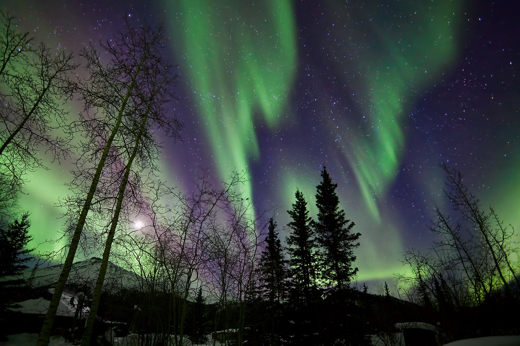 ... Trees With Northern Lights Waves And Curtains | By Pics721