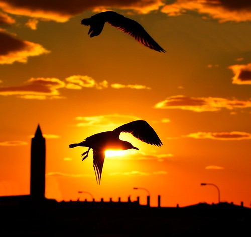 Gulls at Sunset - Jones Beach, NY | by KoolPix