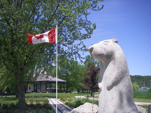 Wiarton Willie | by Blue Lotus