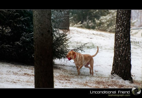 Unconditional Friend | by brodzmahtan